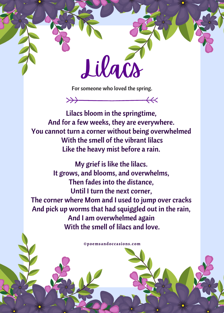 Lilacs bloom in the springtime