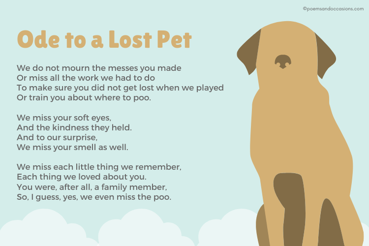 Ode to a Lost Pet
