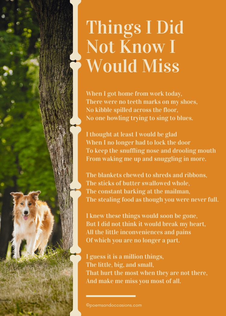 Pet Loss Poems Dog