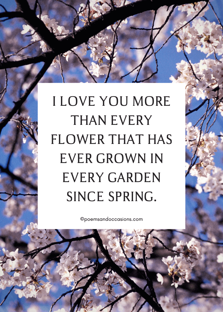 I love you more than spring