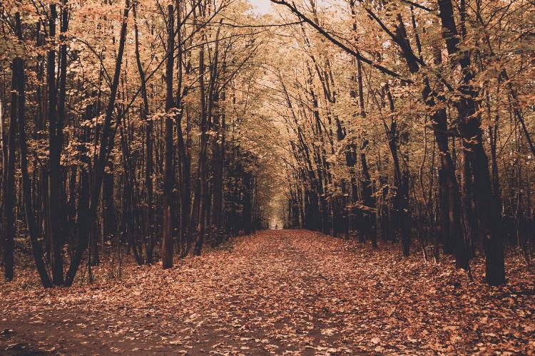 John Keats Autumn